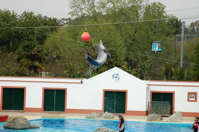 Dos Golfinhos – Jardim Zoológico De Lisboa (Fotos) – Distrito De ~ Fotos Do Jardim Zoologico De Lisboa