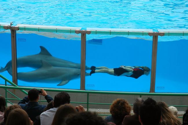 fotos jardim zoologico lisboa:Golfinhos – Jardim Zoológico de Lisboa (Fotos) – Distrito de Lisboa