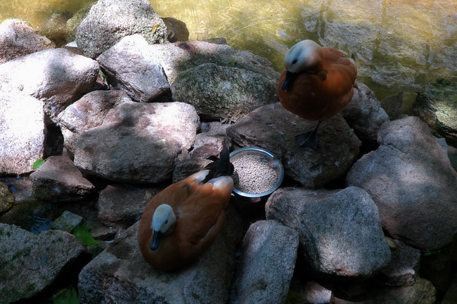 imagens do jardim zoologico da maia
