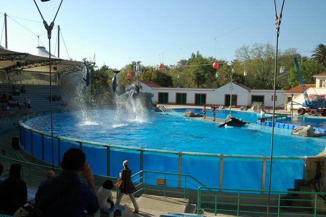 fotos do jardim zoologico de lisboa:dos Golfinhos – Jardim Zoológico de Lisboa (Fotos) – Distrito de